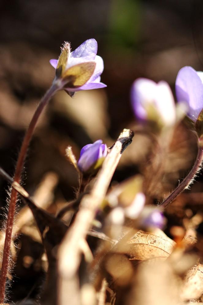 blueflower1