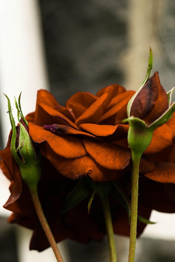 orangeblogg