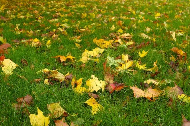 leaf-2860300_1280