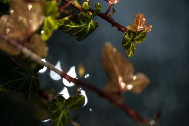 branch1blogg