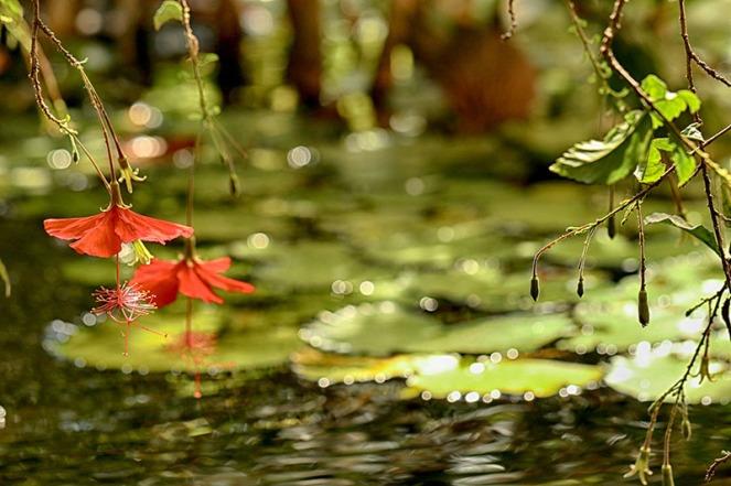 botanisk14WOKBLOGG