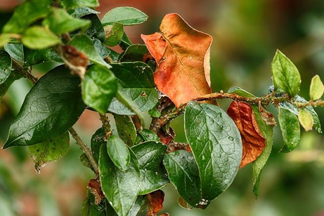 orangeblader1BLOGG