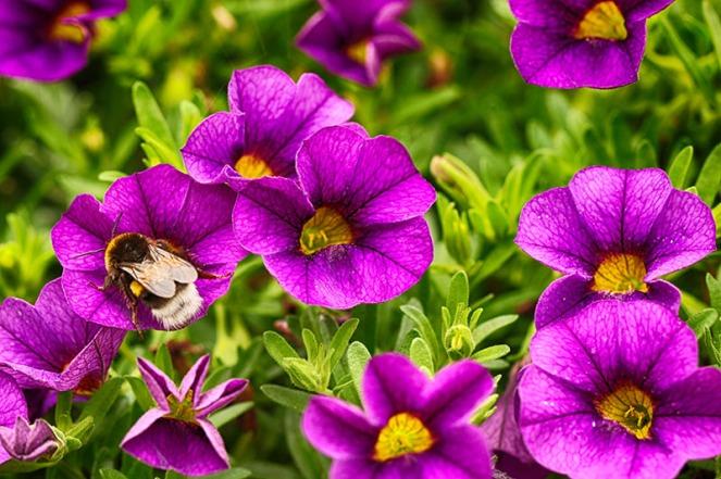 purpleBLOGG