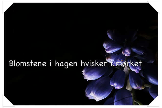 blomsteneihagenblogg.jpg