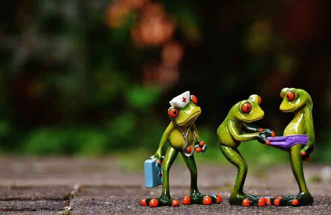 frogs-1672914_1280.jpg